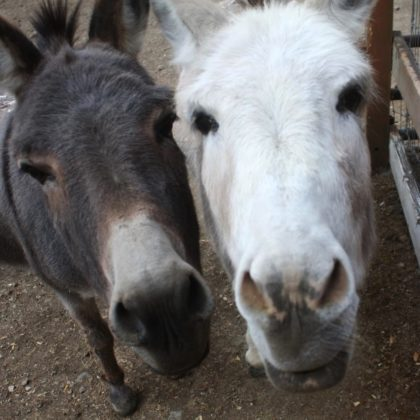 What Do a Homeless Donkey and a Hair Salon Have in Common?